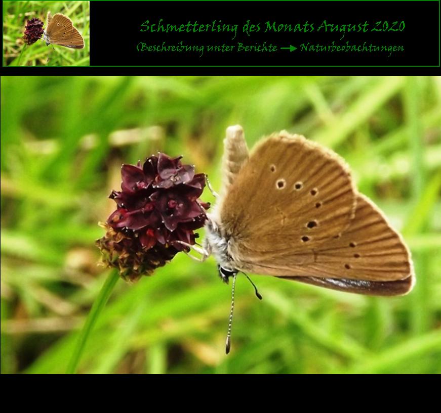 Schmetterling-des-Monats Aug. 2020
